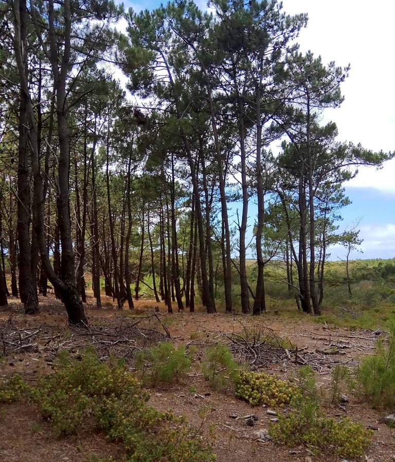 Terreno Rústico em Vale Sobreiro, Vila do Bispo